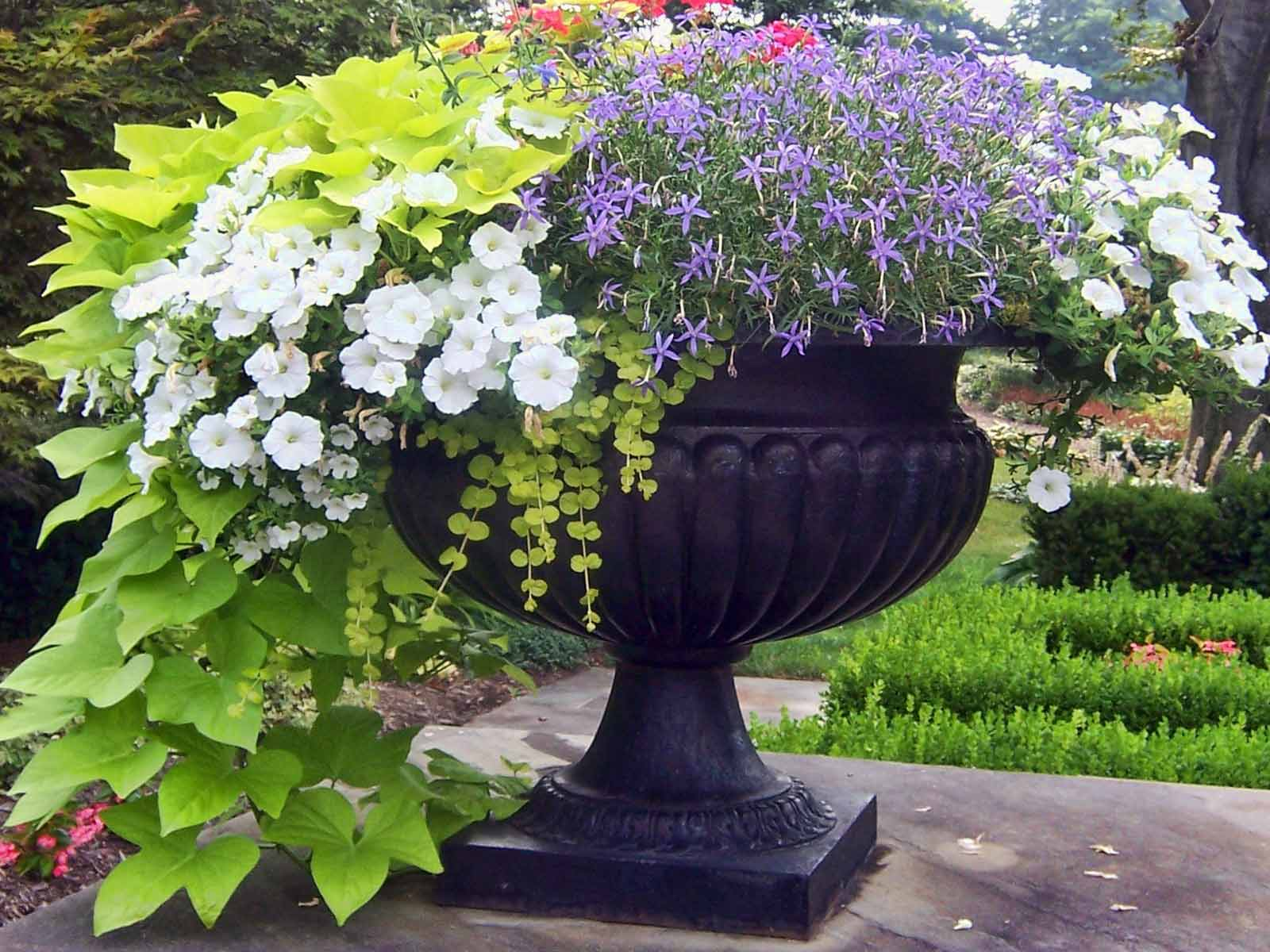 Вазоны в сад