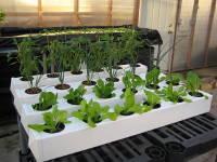 Гидропоника, грунты и удобрения от GROWPRO