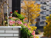 Цветочная оранжерея на балконе