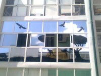 Что лучше всего украсит окна в квартире